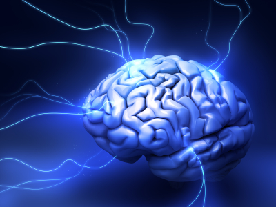 Several Parts Of Your Brain Help You >> Do You Know These Three Different Parts Of Your Brain Learning As